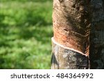 close up tapping latex or sap... | Shutterstock . vector #484364992