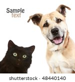 Stock photo close up portrait of a cat and dog isolated on white background 48440140