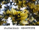 flower | Shutterstock . vector #484499398