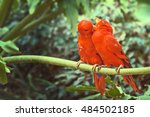 A Couple Of Red Parrots Sittin...