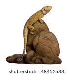 lawson's dragon  pogona...   Shutterstock . vector #48452533