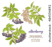 elderberry branches vector set... | Shutterstock .eps vector #484554892