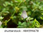 Grey Haristreak Butterfly