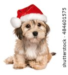 Stock photo funny sitting bichon havanese puppy dog in a christmas hat looking at camera isolated on a white 484601575