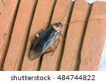cockroache in house. | Shutterstock . vector #484744822