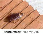 cockroache in house. | Shutterstock . vector #484744846