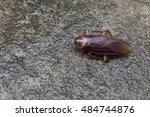 cockroache in house. | Shutterstock . vector #484744876