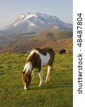 pottoka  equus caballus  in the ... | Shutterstock . vector #48487804