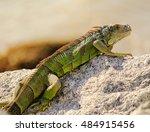 closeup of bright green iguana  ... | Shutterstock . vector #484915456