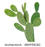cactus isolated on white... | Shutterstock . vector #484958182