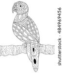 parrot coloring book for adults ... | Shutterstock .eps vector #484969456