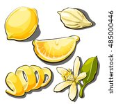 whole ripe yellow lemon. peel ... | Shutterstock .eps vector #485000446