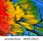 macro photograph of the multi... | Shutterstock . vector #485015812