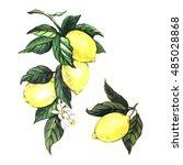 watercolor lemons. painting on...   Shutterstock . vector #485028868