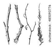 hand drawn wood twig set   ink... | Shutterstock .eps vector #485093776