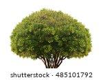 Cerbera Odollam Tree Isolated...