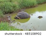Giant Tortoise In A Pond In...