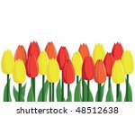 vector illustration of blossoming tulips - stock vector