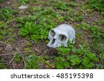 monkey skeleton skull | Shutterstock . vector #485195398