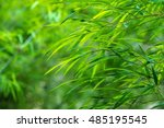 green grass background | Shutterstock . vector #485195545