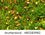 Autumn Leaves On Green Grass...