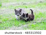 Stock photo mother cat and kitten on green grass 485313502