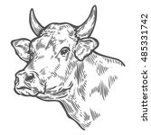 cows head. hand drawn sketch in ... | Shutterstock .eps vector #485331742