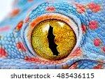 Colorful Toke's Gecko Amazing...