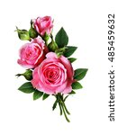 Stock photo pink rose flowers bouquet isolated on white 485459632