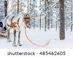 reindeer in a winter forest in...   Shutterstock . vector #485462605