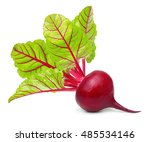 beetroot with leaves  fresh... | Shutterstock . vector #485534146