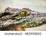 The Terrifying Eye Of Crocodile