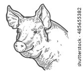Pig Head. Hand Drawn Sketch In...