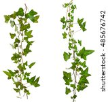 sprig of ivy with green leaves... | Shutterstock . vector #485676742