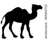 Camel Walking