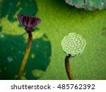 Lotus Seeds And  Dried Lotus...