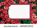 frame with tulips for greetings ... | Shutterstock . vector #485852902