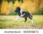 Little Painted Shetland Pony...