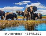 botswana chobe national park ... | Shutterstock . vector #485951812
