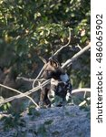 Small photo of African Wild Dog at den site