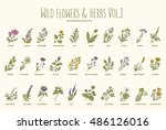 wild flowers and herbs hand... | Shutterstock .eps vector #486126016