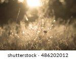 grass background | Shutterstock . vector #486202012