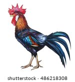 Rooster Red Crest Drawing ...