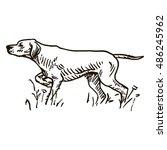 dog hand drawn. pointer. vector ... | Shutterstock .eps vector #486245962