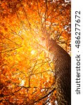 Sunny Autumn Background With...