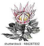 tropical pink king protea...   Shutterstock . vector #486287332