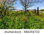 A Meadow At A Farm Or Ranch...