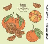 Collection Of Tangerine . Hand...