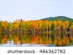 Autumn Trees Reflected In The...
