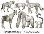 African Animals Set. Hyena ...
